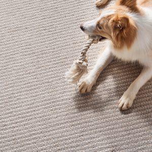 Dog on Carpet | Frazee Carpet & Flooring