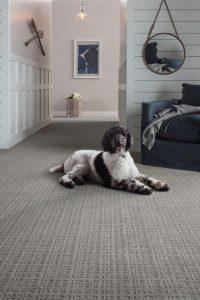 Dog sitting on Carpet | Frazee Carpet & Flooring