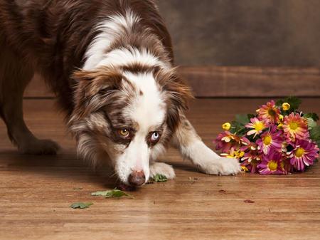 Dog on floor | Frazee Carpet & Flooring